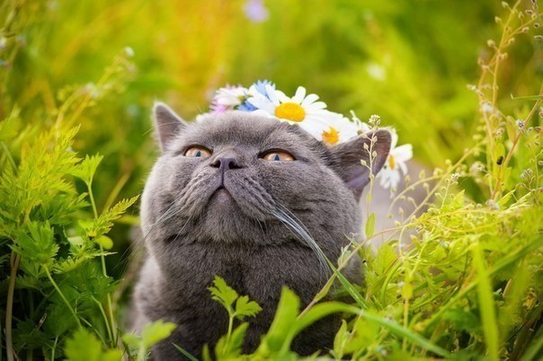 Коты летом [35 Фото]