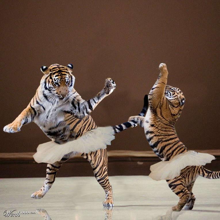 Танцы смешные картинка, для рабочего стола