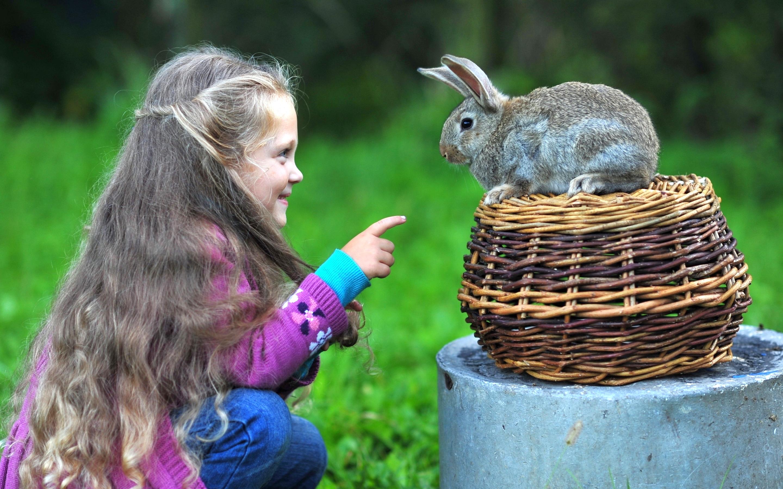 Божественные картинки, девочка с кроликами картинки