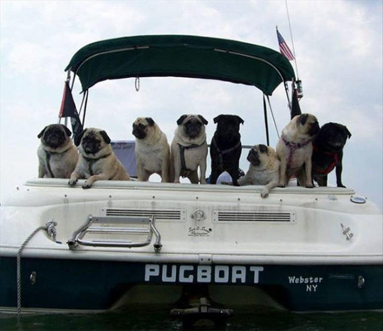 Мопс лодка