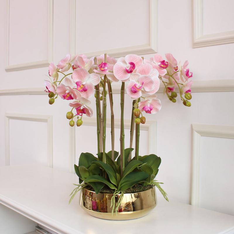 Чем поможет орхидея: волшебные возможности цветка