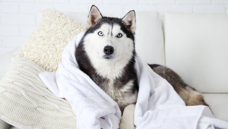Какие породы собак - настоящие долгожители