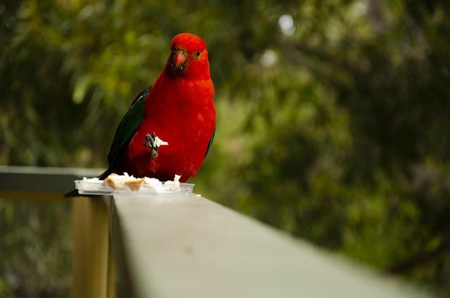 Как ведет себя на улице попугай, вылетевший из клетки