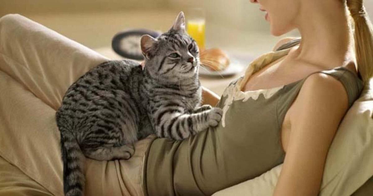 Как кошки на самом деле воспринимают своих хозяев