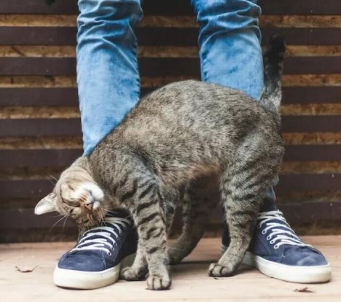 Как понять, что кошка вас любит