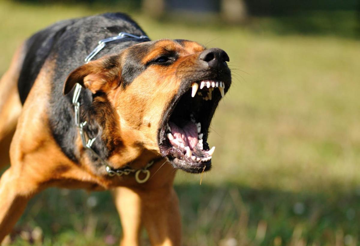 Как быть, если на пробежке привязался пес