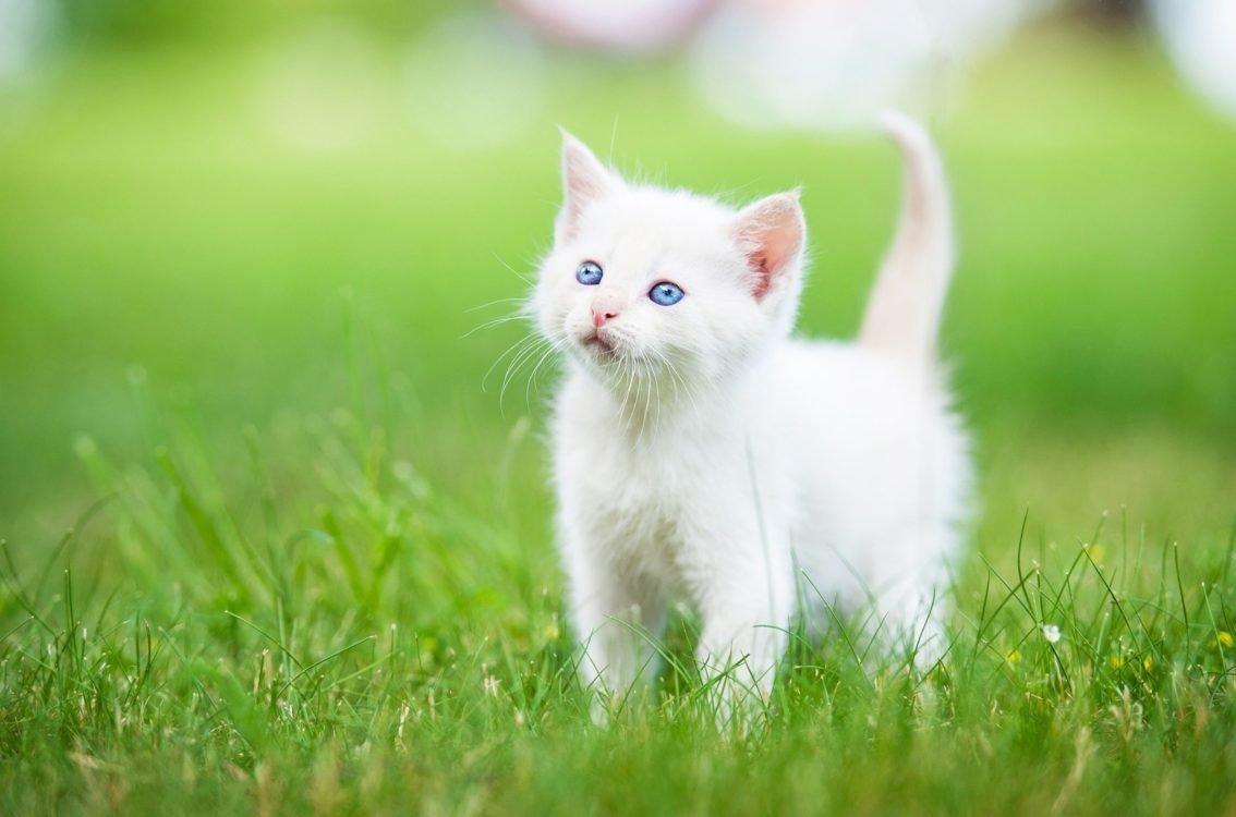 Почему у мамы-кошки нельзя забирать котят
